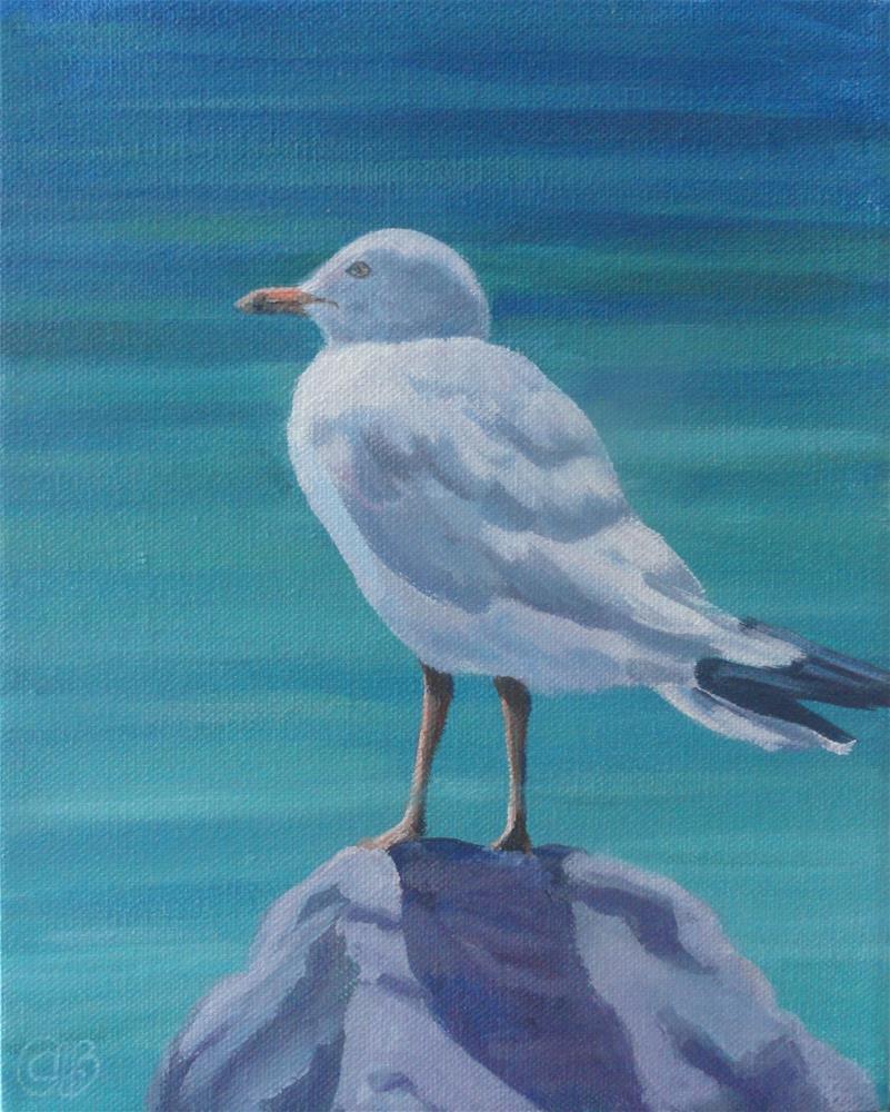 """Seagull"" original fine art by Christine Blain"