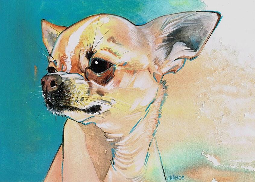 """No. 36 Chihuahua"" original fine art by Annabel Chance"