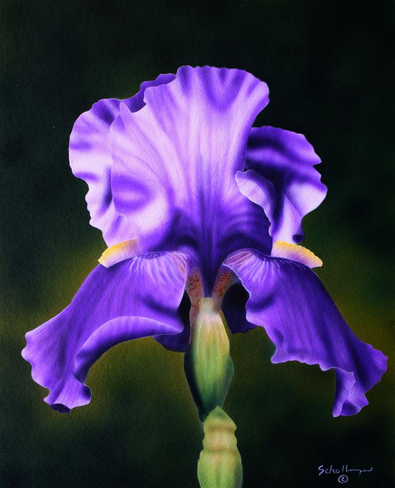 """Purple Bloomer"" original fine art by Fred Schollmeyer"