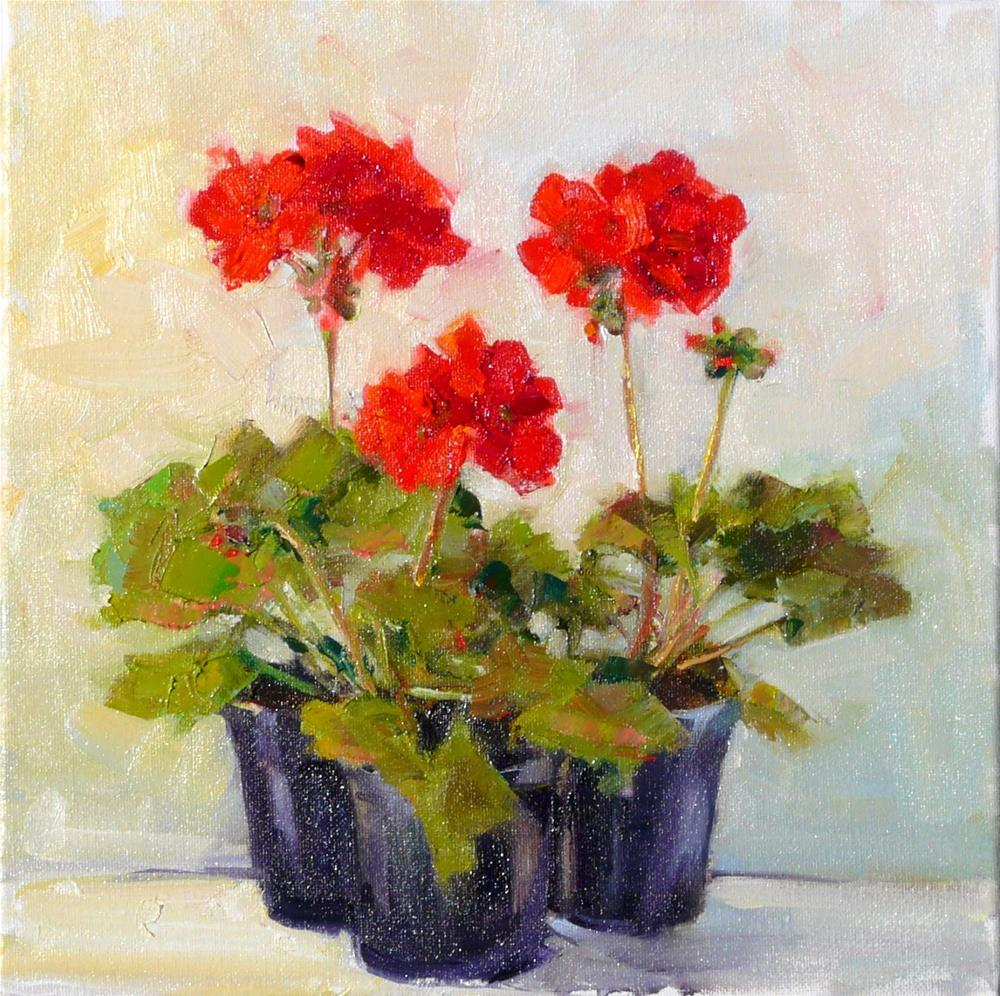 """3 Geranium Pots.still life,oil on canvas.12x12,price$475"" original fine art by Joy Olney"