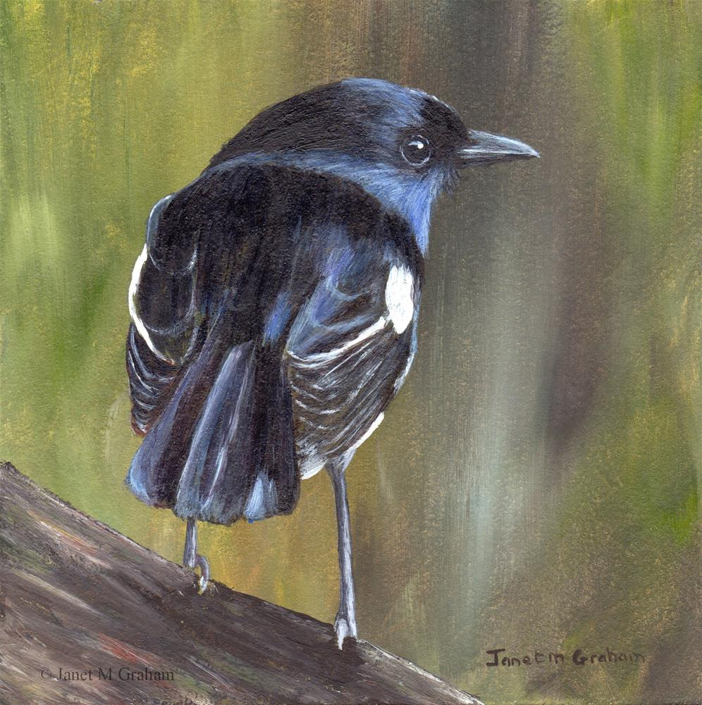 """Madagascar Magpie - Robin"" original fine art by Janet Graham"