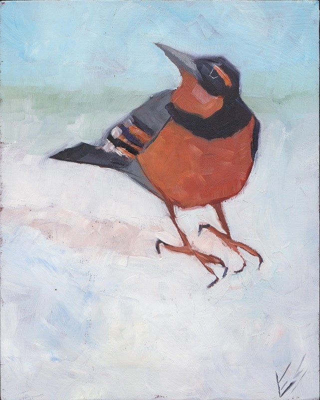 """Varied Thrush In Winter"" original fine art by Elizabeth See"