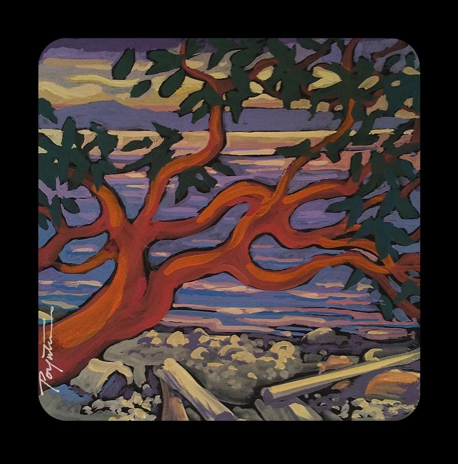 """3.26 Sunset Arbutus"" original fine art by Jan Poynter"