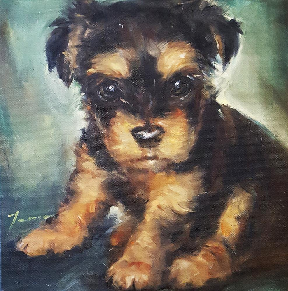 """schnauzer"" original fine art by Teresa Yoo"