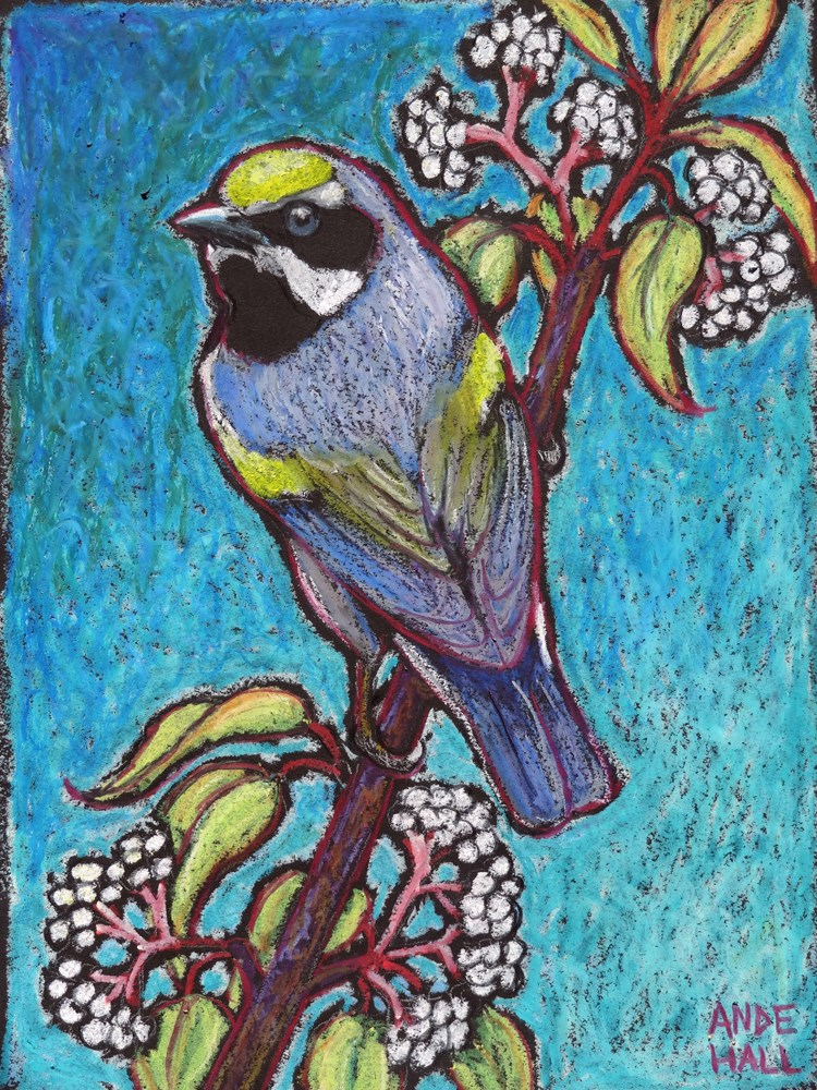 """Golden Winged Warbler Male"" original fine art by Ande Hall"
