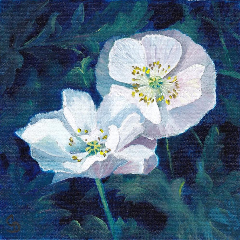 """White Poppies"" original fine art by Christine Derrick"