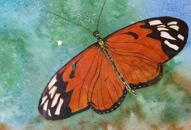 """Butterfly 3"" original fine art by Horst Berlow"