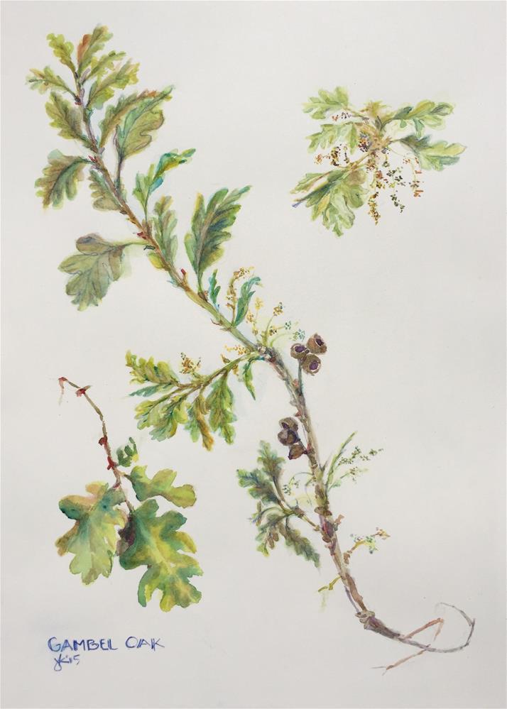 """Gambel Oak. Quercus gambelii"" original fine art by Jean Krueger"
