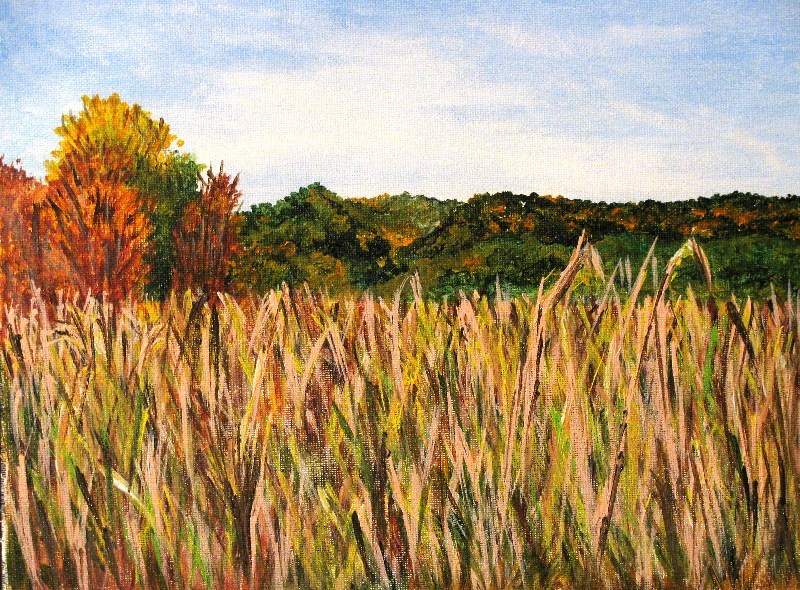 """Amber waves of Grain"" original fine art by Nan Johnson"