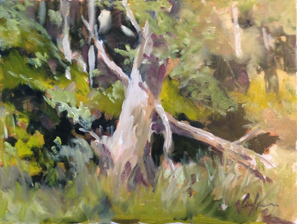 """The Sentinel - Nichols Arboretum"" original fine art by Cornelis vanSpronsen"