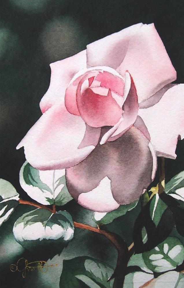 """Blush Pink Rose"" original fine art by Jacqueline Gnott, whs"