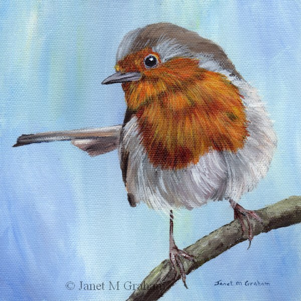 """Robin 6"" original fine art by Janet Graham"