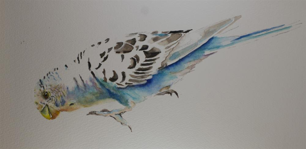 """Pet #4: Parakeet"" original fine art by Sue Churchgrant"