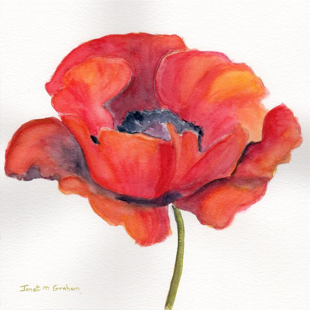 """Poppy"" original fine art by Janet Graham"