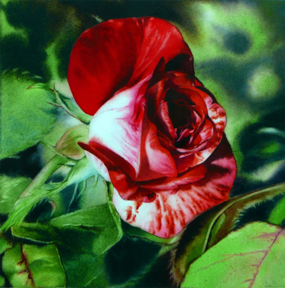 """Peppermint Rose"" original fine art by Arena Shawn"