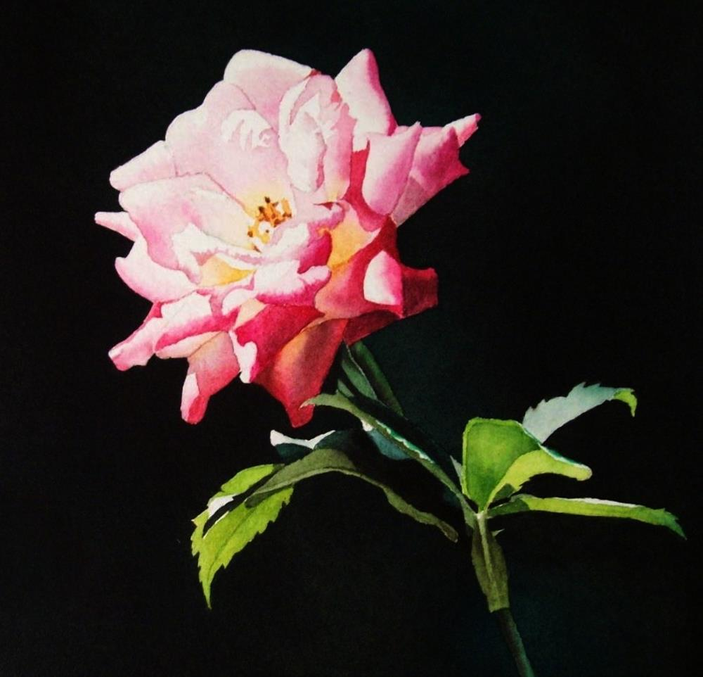 """Evening Rose"" original fine art by Jacqueline Gnott, TWSA, WHS"