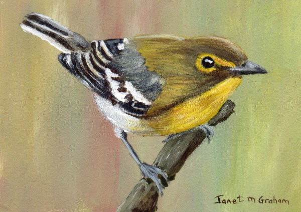 """Yellow Thoated Vireo ACEO"" original fine art by Janet Graham"