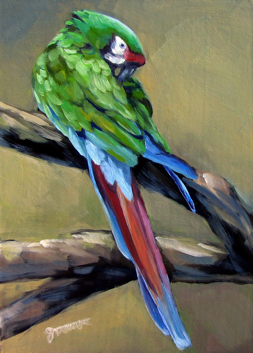 """Green Parrot"" original fine art by Joanna Bingham"