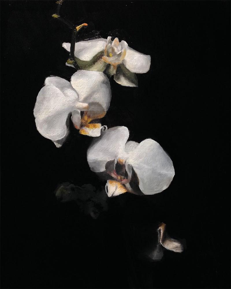 """White Orchid"" original fine art by Chris Beaven"