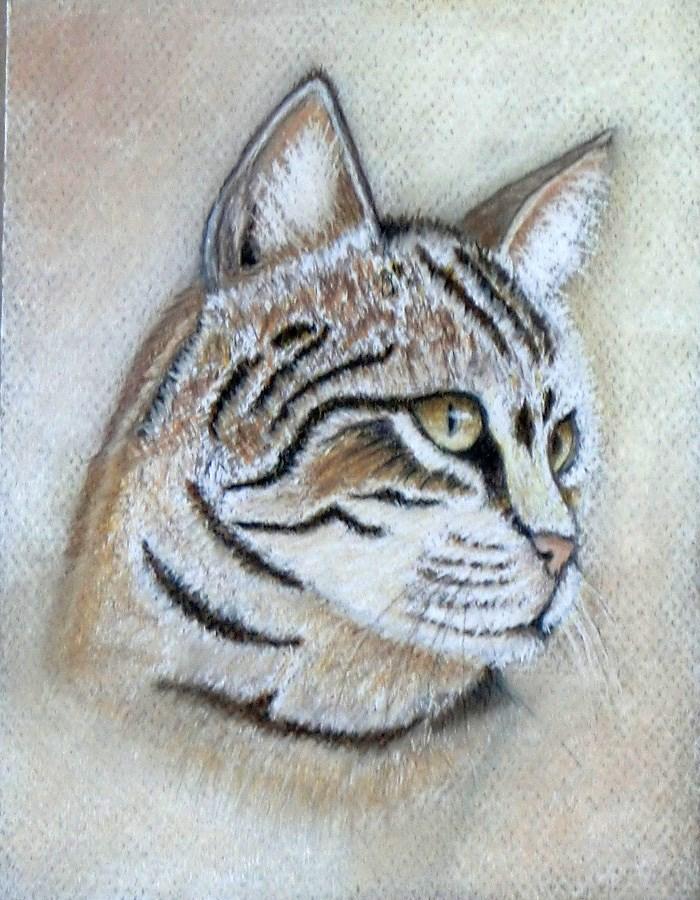 """""""A Kitten"""" original fine art by karen richardson"""