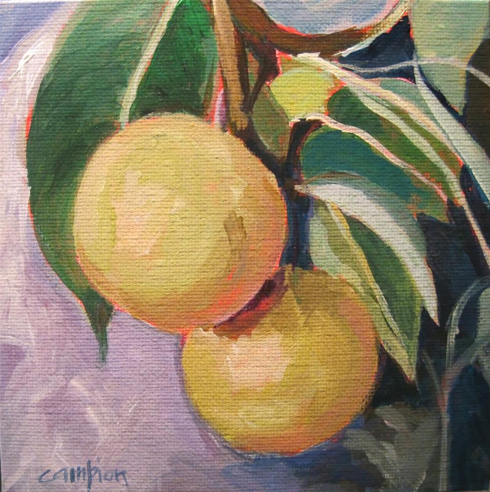 """194 Asian Pears"" original fine art by Diane Campion"