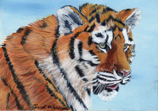 """Tiger Cub ACEO"" original fine art by Janet Graham"