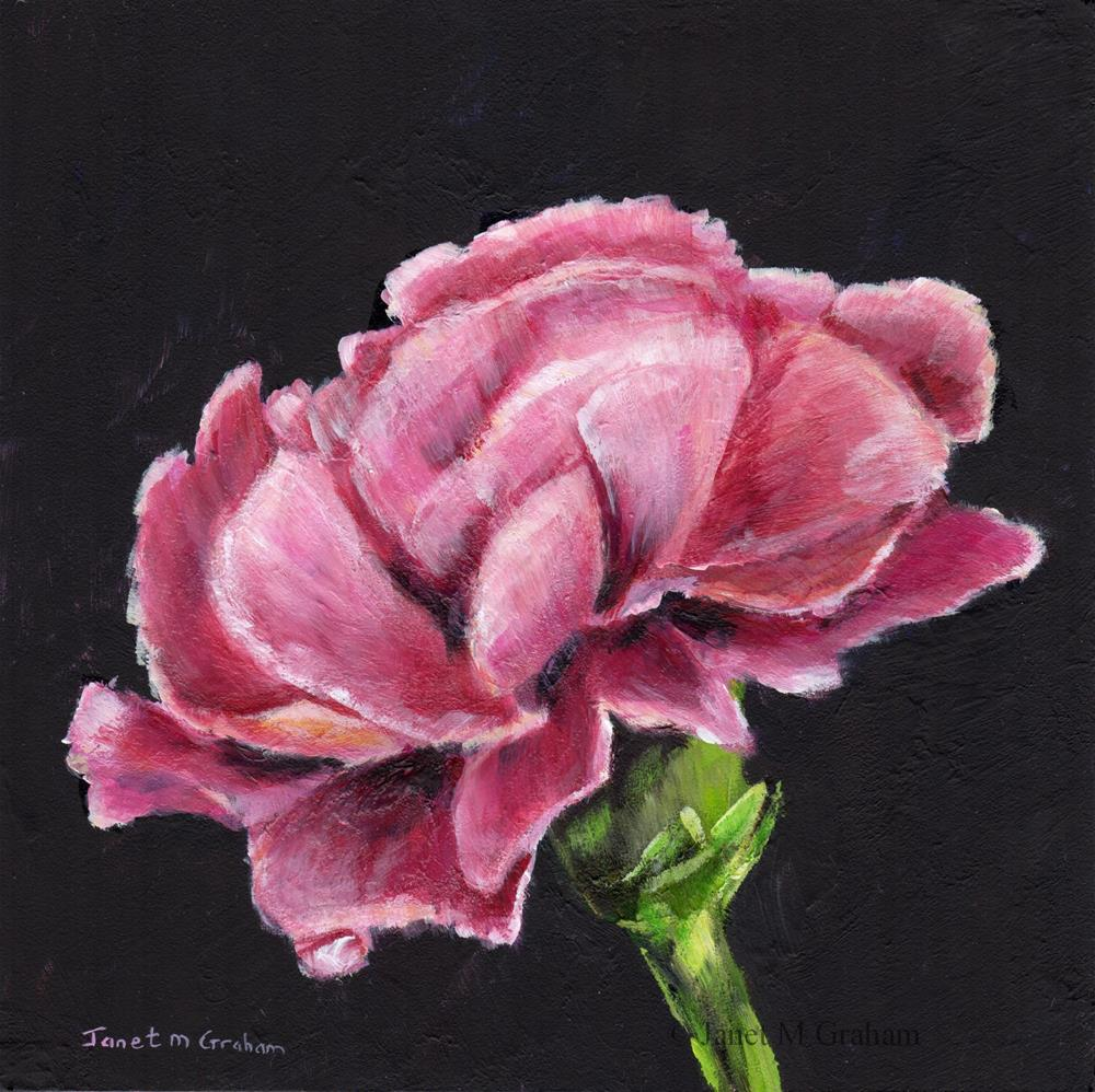 """Pink Carnation"" original fine art by Janet Graham"
