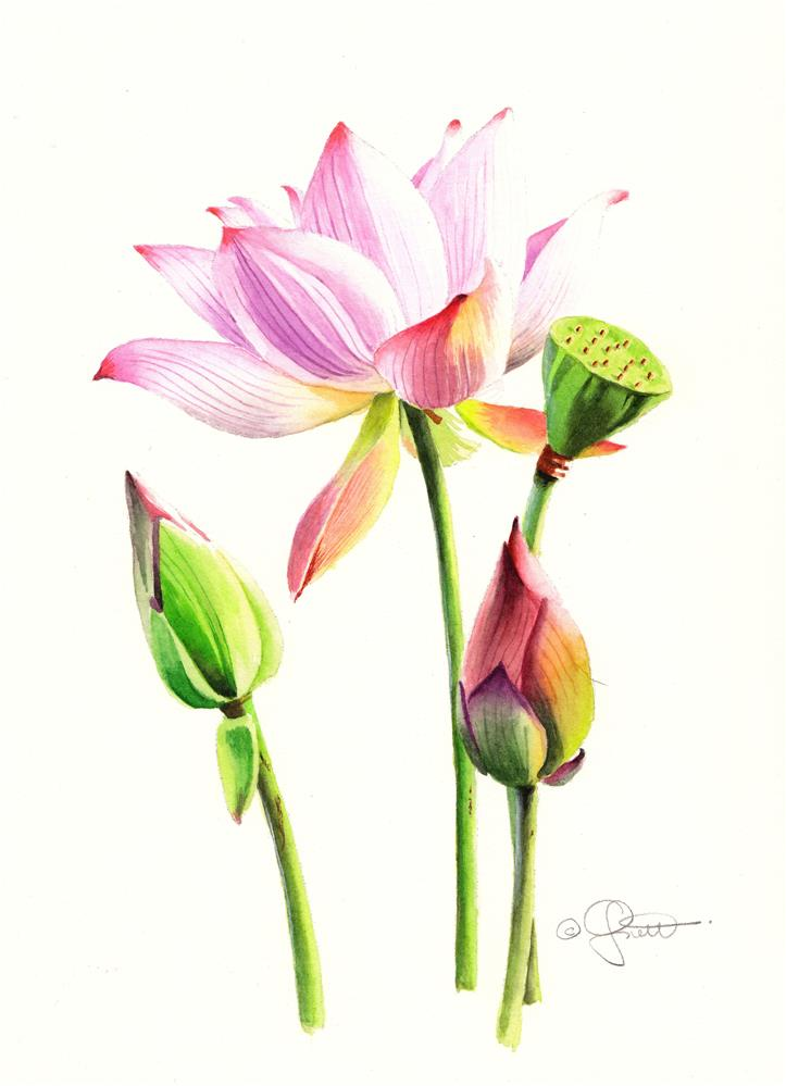 """Lotus"" original fine art by Jacqueline Gnott, whs"