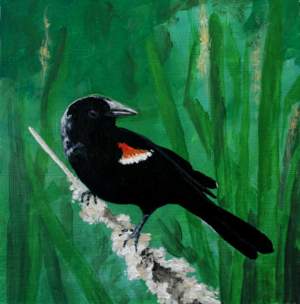 """Red Winged Blackbird"" original fine art by Jean Nelson"