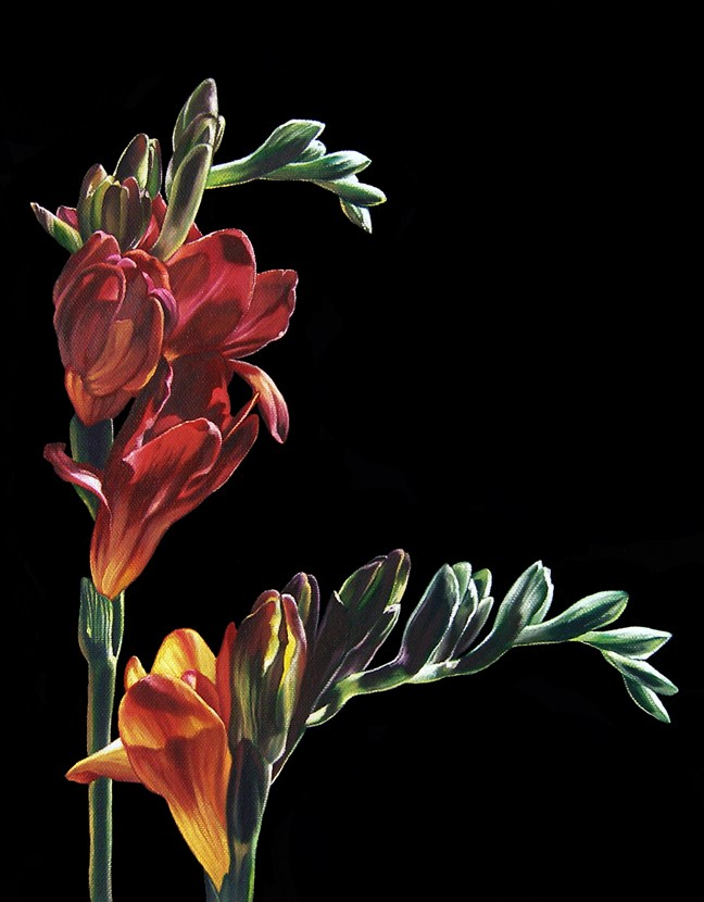 """Freesia III"" original fine art by Jelaine Faunce"