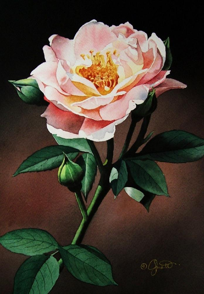 """Evening Rose"" original fine art by Jacqueline Gnott, whs"