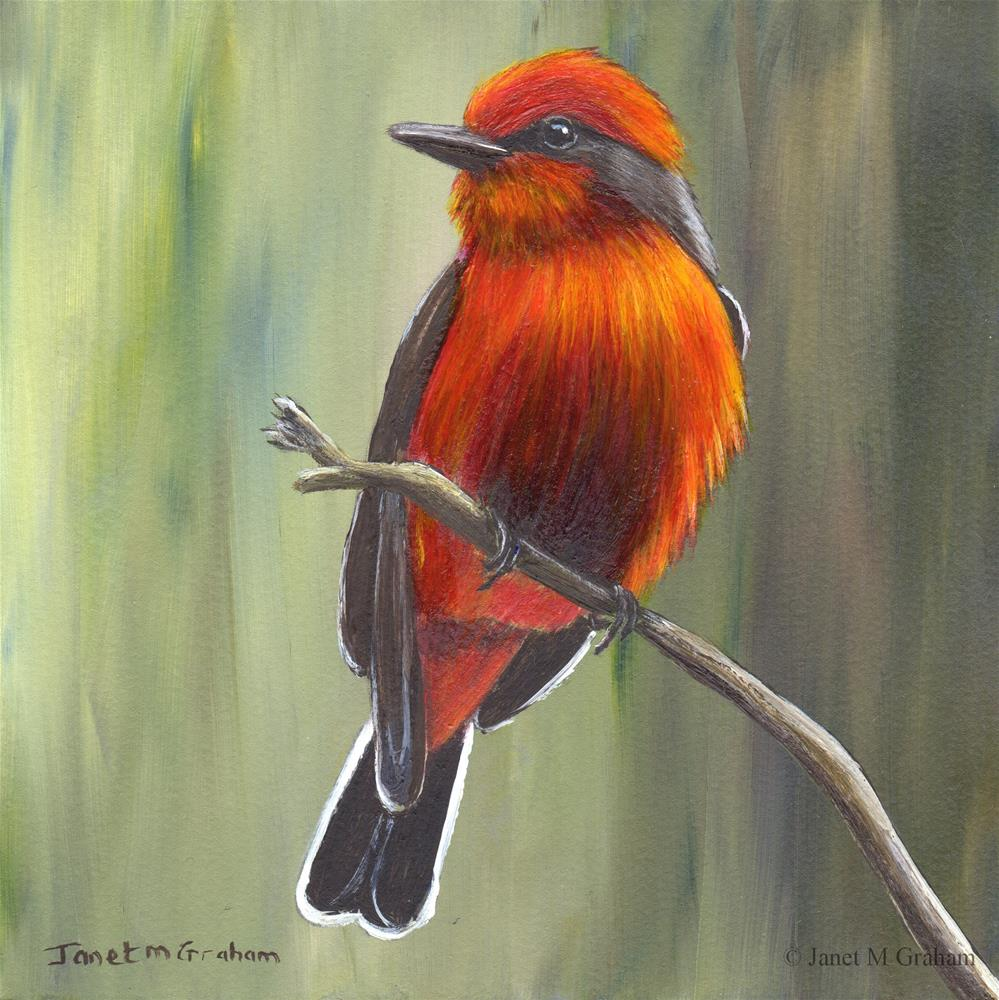 """Vermilion Flycatcher"" original fine art by Janet Graham"