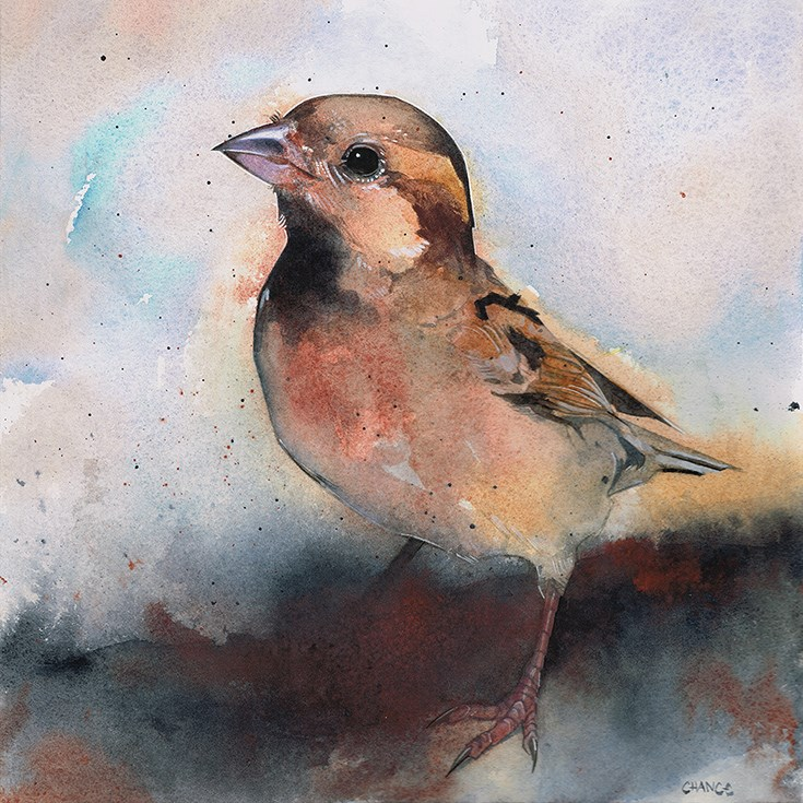 """No. 51 Sparrow"" original fine art by Annabel Chance"