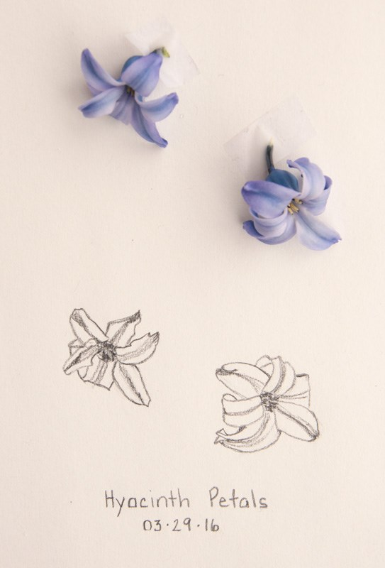 """Daily Sketch: Hyacinth Petals"" original fine art by Debbie Lamey-Macdonald"