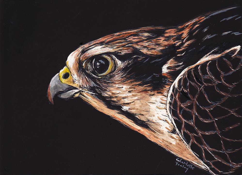 """Red Tail Hawk Profile"" original fine art by Charlotte Yealey"