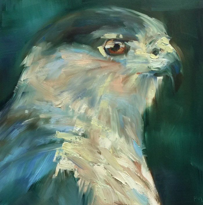 """I'm a Cooper's Hawk!"" original fine art by Patti McNutt"