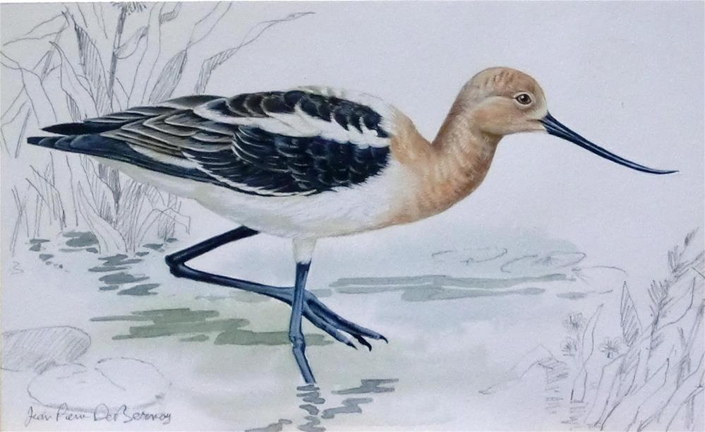 """Avocet"" original fine art by Jean Pierre DeBernay"