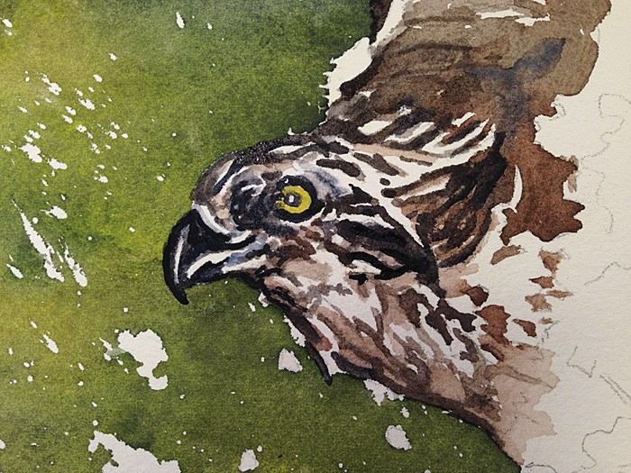 """O is for Osprey"" original fine art by Andy Sewell"