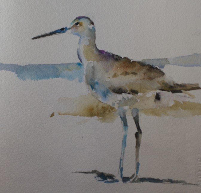"""Willet Shorebird watercolor sketch"" original fine art by Sue Churchgrant"