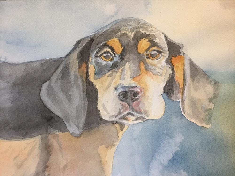 """Boomer"" original fine art by Cindy McDonough"
