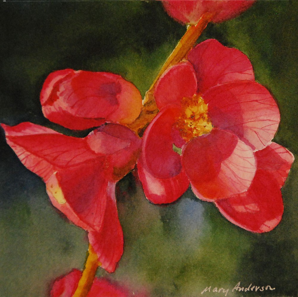 """Quince"" original fine art by Mary Anderson"