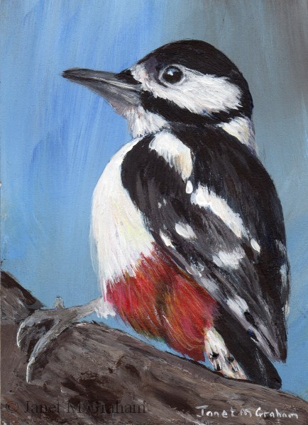 """Great Spotted Woodpecker ACEO"" original fine art by Janet Graham"