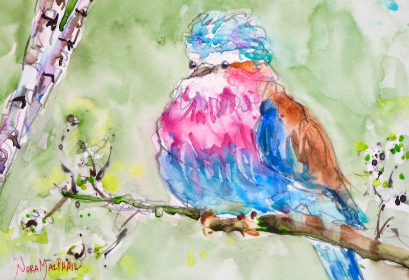 """""""lilac breasted roller bird"""" original fine art by Nora MacPhail"""