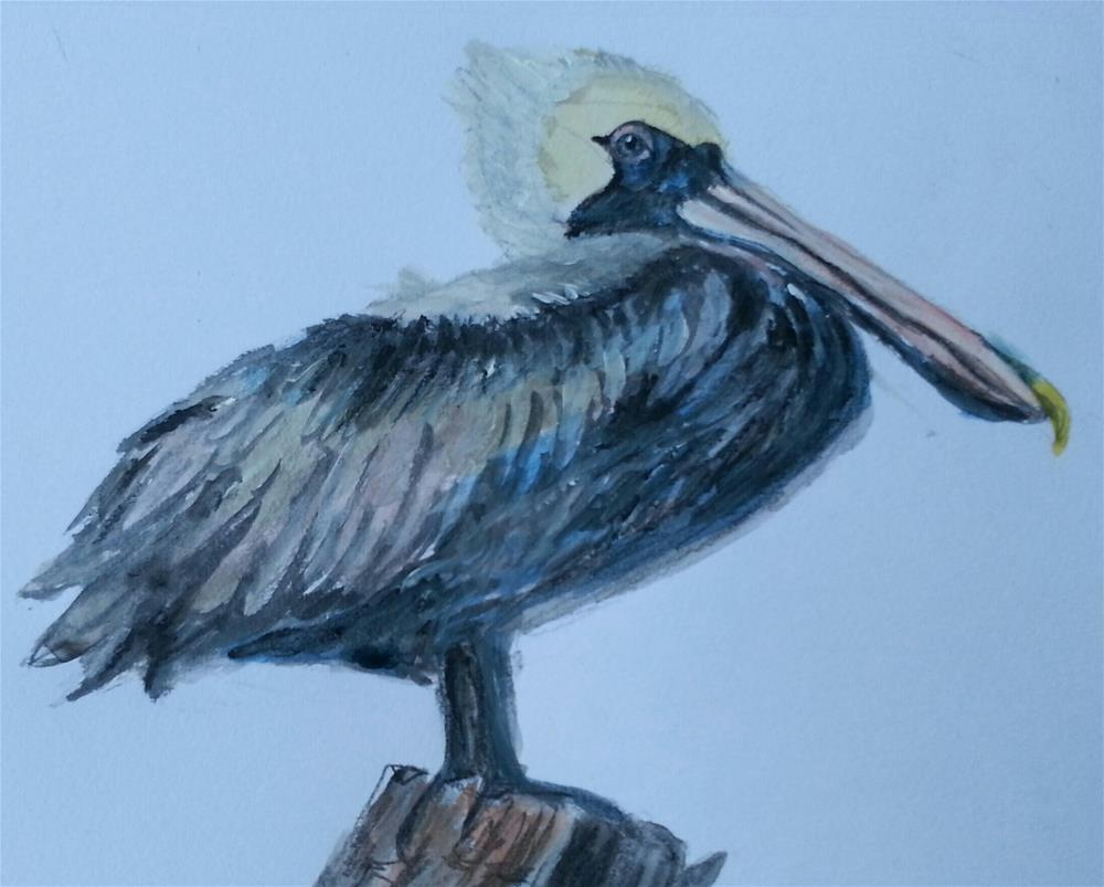 """Perky Pelican"" original fine art by Phyllisha Hamrick"