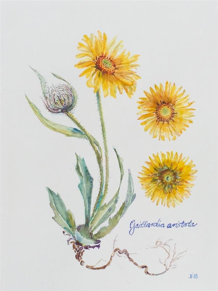 """Gaillardia aristata"" original fine art by Jean Krueger"
