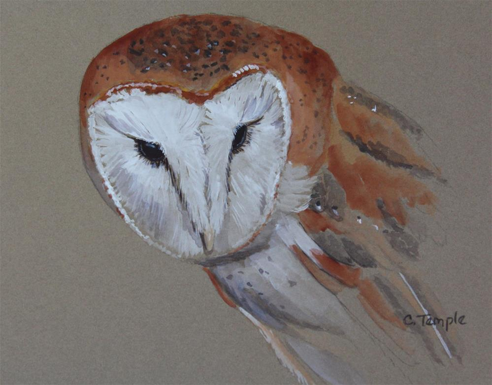 """Barn owl sketch"" original fine art by Catherine Temple"