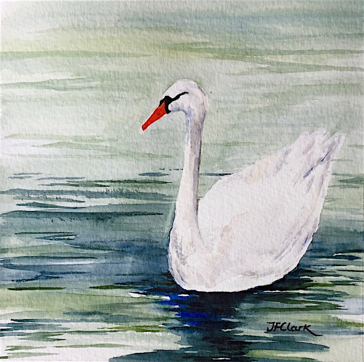 """Swan, study"" original fine art by Judith Freeman Clark"