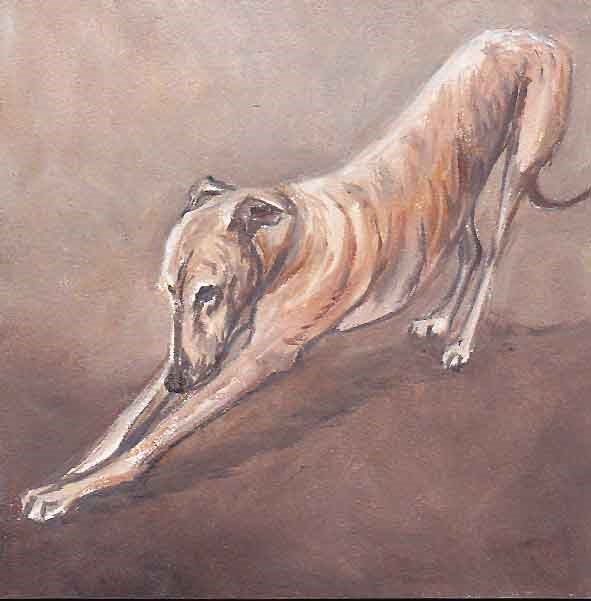 """Greyhound Stretch"" original fine art by Charlotte Yealey"