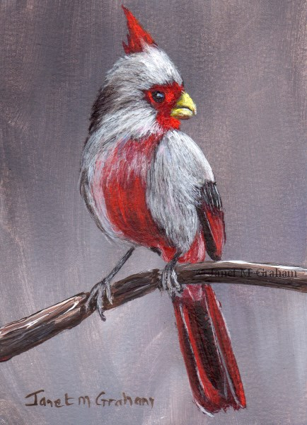 """Pyrrhuloxia ACEO"" original fine art by Janet Graham"