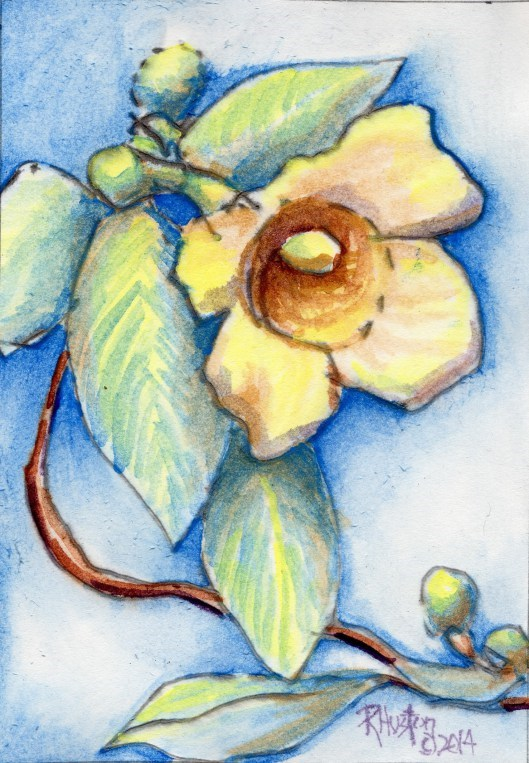 """Carolina Jessamine (Gelsemium sempervirens)"" original fine art by Richard Huston"